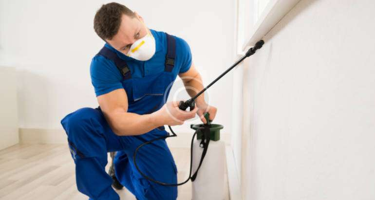 Common Household Pest causes Allergy
