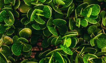 Trattamenti per il verde